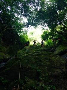 Conquering the Rainforest